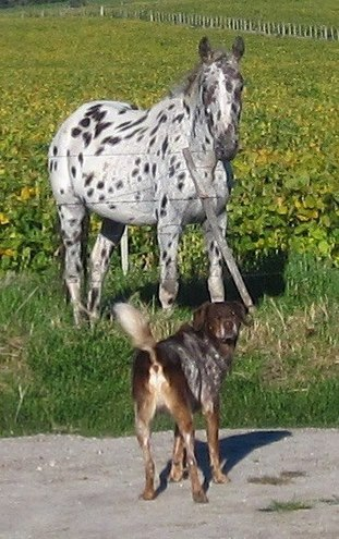 Romance Author Amy Chanel's dog Henry with Horse